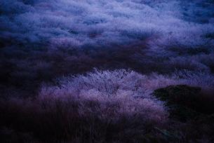 冬の始まりの写真素材 [FYI00190943]