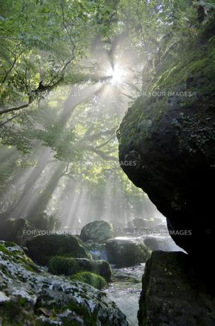 菊池渓谷の光芒の写真素材 [FYI00191024]