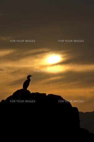 夕焼けと海鵜の写真素材 [FYI00191118]