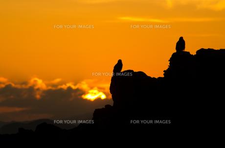 岩礁の鳥と朝日の写真素材 [FYI00191352]