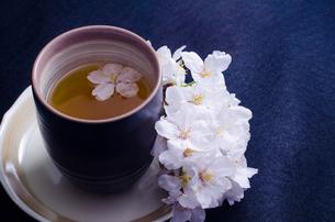 湯呑みと桜の写真素材 [FYI00191734]