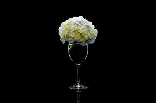 アジサイとワイングラスの写真素材 [FYI00191770]