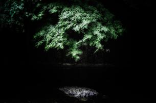 木漏れ日で光る川と樹木の写真素材 [FYI00191809]