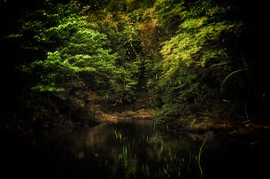 小川と蛍の写真素材 [FYI00191829]
