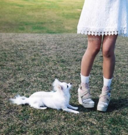 足元に座る犬の写真素材 [FYI00191859]