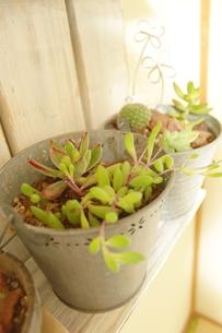 多肉植物の写真素材 [FYI00191901]