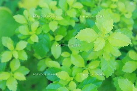 新緑の写真素材 [FYI00191911]