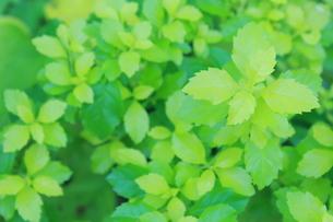 新緑の素材 [FYI00191911]
