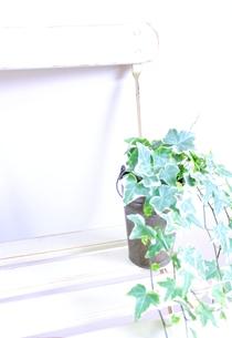 インテリアの写真素材 [FYI00191915]