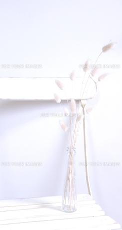 白いイスの写真素材 [FYI00191916]