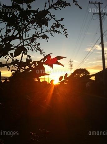 南天のシルエットと朝日の写真素材 [FYI00192163]