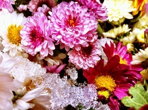 色とりどりの小菊と雪氷の写真素材 [FYI00192186]