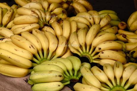 バナナの写真素材 [FYI00192218]