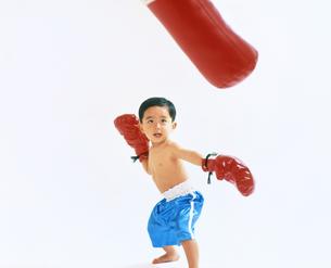 子供  ボクサー チャレンジの写真素材 [FYI00192777]