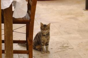 トルコ カッパドキアの猫の写真素材 [FYI00192894]
