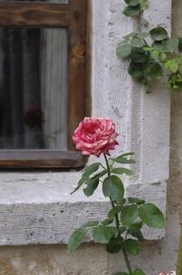 トルコ カッパドキアの花の写真素材 [FYI00192896]