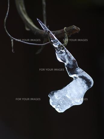 自然がつくり出した氷の芸術の写真素材 [FYI00192986]