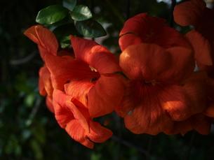 燃ゆるオレンジの写真素材 [FYI00193099]