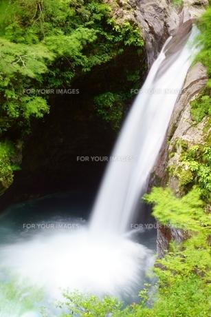 夏の大釜の滝の写真素材 [FYI00193149]