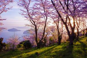 暁の桜の写真素材 [FYI00193195]