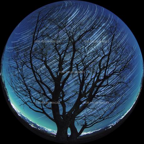 星空を抱く木の写真素材 [FYI00193203]