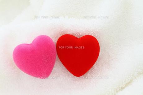 赤とピンクのハート 白バックの写真素材 [FYI00193409]
