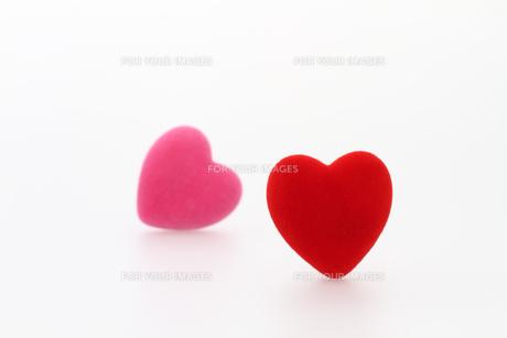 赤とピンクのハート 白バックの写真素材 [FYI00193431]