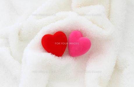 赤とピンクのハート 白バックの写真素材 [FYI00193435]