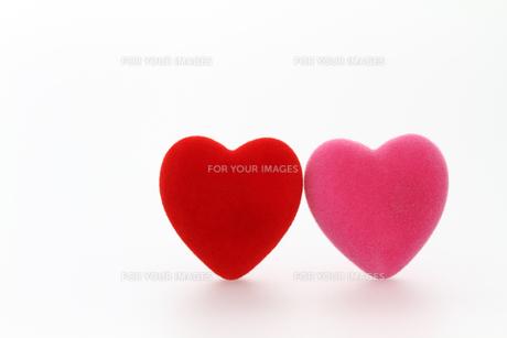 赤とピンクのハート 白バックの写真素材 [FYI00193448]