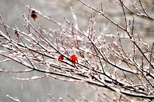凍える寒さの素材 [FYI00193534]
