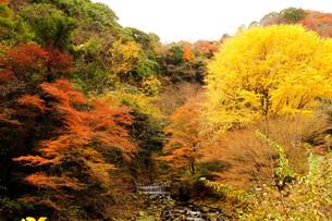 秋色の写真素材 [FYI00193547]