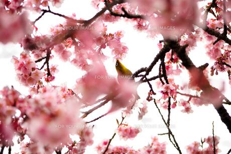 春うららかな日常の素材 [FYI00193549]