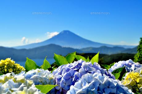 紫陽花と富士山(大観山の夏)の写真素材 [FYI00193560]