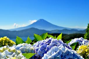 紫陽花と富士山(大観山の夏)の素材 [FYI00193560]