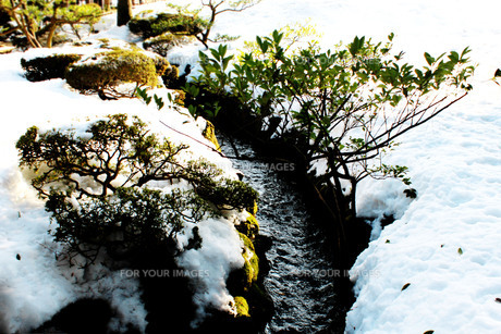日本庭園を流れる小川の写真素材 [FYI00193710]