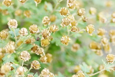 冬の花の写真素材 [FYI00194203]