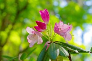 春色はじけるの写真素材 [FYI00194206]