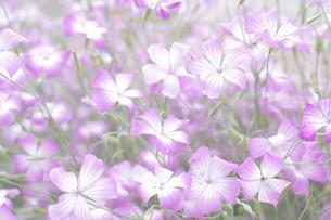 初夏を感じるの写真素材 [FYI00194220]