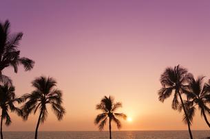 サンセット 椰子の写真素材 [FYI00194308]
