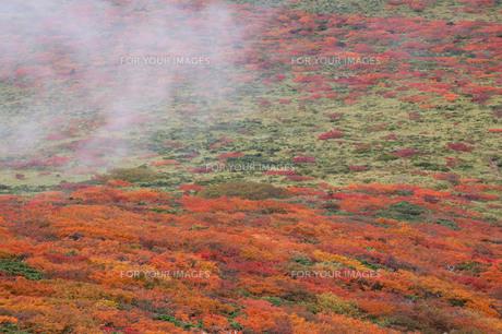 紅葉に霧をそえての写真素材 [FYI00194312]