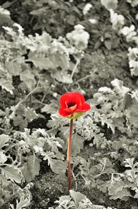 小さな赤い花の写真素材 [FYI00194361]