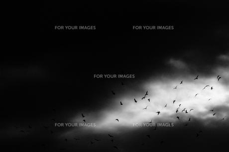 Bird flockの素材 [FYI00194362]