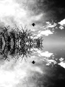 Reflection -Nature-の素材 [FYI00194386]