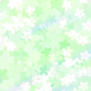 桜の素材 [FYI00194532]