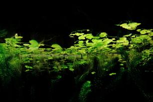 水草の写真素材 [FYI00194830]