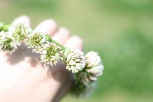 シロツメクサの花冠の写真素材 [FYI00195074]