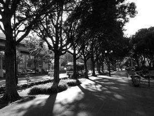 街路樹の陰の写真素材 [FYI00195140]