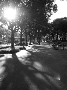 街路樹の木漏れ日の写真素材 [FYI00195155]