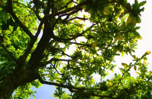 greenの写真素材 [FYI00195175]