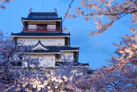 桜とライトアップされた会津若松城の素材 [FYI00195209]